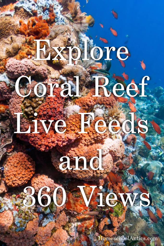 Resources to explore coral reef live feeds and 360 views at home for fun or education.